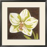 Surabaya Orchid II Prints by Judy Shelby