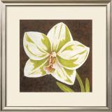 Surabaya Orchid II Art by Judy Shelby