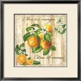 Mon Bel Oranger Poster by Noel Romero