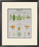 Plants and Leaves Teaching Chart Prints by DEYROLLE 