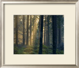 Forest of Light Prints by Henrik Lund