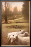 Ruthie&#39;s Sheep Posters by Barbara Kalhor