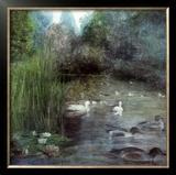 Walden Pond Posters by Piet Bekaert