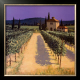 Vineyard Shadows Posters by David Short