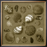 Shell Collector Series V Poster by Renee Stramel