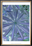 Woodland Plants in Blue I Posters by Sharon Chandler