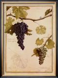 Cabernet Sauvignon Poster by Meg Page