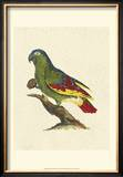 Crackled Antique Parrot II Prints by George Shaw
