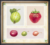 Antique Fruits Posters by Alex Bloch