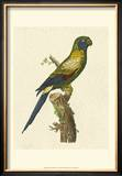 Crackled Antique Parrot I Print by George Shaw