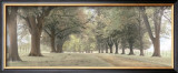 Avenue of Trees Prints by Michael Hudson