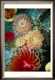 Graphic Sea Anemone III Art