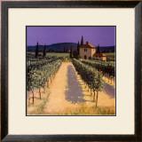 Vineyard Shadows Art by David Short
