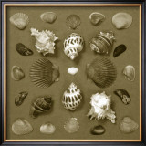 Shell Collector Series VI Prints by Renee Stramel