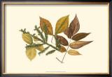 Elm, Spruce, Beech and Ash Art by  Denton