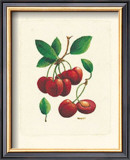Cherries Prints by Linda Casey