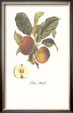 Apple, Blanc-Michel Prints by Francois Langlois
