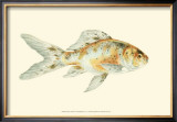 Speckled Goldfish Posters by S. Matsubara