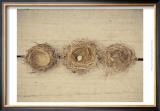 Nesting II Posters by Meghan McSweeney