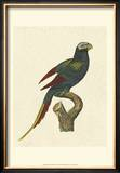 Crackled Antique Parrot III Posters by George Shaw