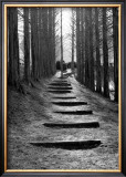 Forest Steps Framed Giclee Print by Stephen Lebovits