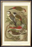 Pet Songbirds III Print by  Cassel
