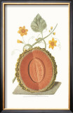 Melon Print by George Brookshaw