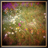 Daisy Field Limited Edition Framed Print by Rebecca Tolk