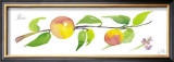 Peach Branch Print by Robbin Gourley