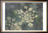 Queen Ann's Lace III Print by Meghan McSweeney