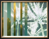 Tropical Variation II Limited Edition Framed Print by M.J. Lew