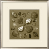 Shell Collector Series V Posters by Renee Stramel