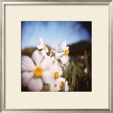 Daffodils Limited Edition Framed Print by Rebecca Tolk