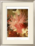 Graphic Sea Anemone I Prints