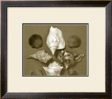 Shell Collector Series III Prints by Renee Stramel