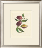 Plums Poster by Linda Casey