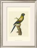 Crackled Antique Parrot I Posters by George Shaw