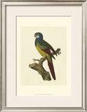 Crackled Antique Parrot IV Prints by George Shaw