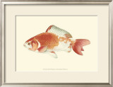 Common Goldfish Print by S. Matsubara