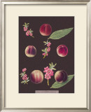 Peaches Posters by George Brookshaw