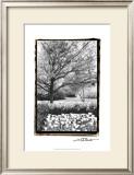Springtime Garden III Prints by Laura Denardo