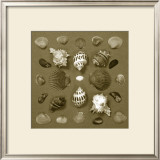 Shell Collector Series VI Art by Renee Stramel