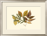 Elm, Spruce, Beech and Ash Prints by  Denton