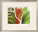 Rainforest Life I Limited Edition Framed Print by M.J. Lew