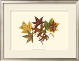 Tulip Tree, Gum and Scarlet Oak Posters by  Denton