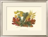 White Oak, Balsam Fir, and Yew Birch Prints by  Denton