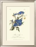 Blue Jays Posters by John James Audubon