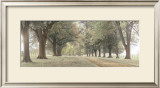 Avenue of Trees Art by Michael Hudson