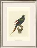 Crackled Antique Parrot III Poster by George Shaw