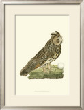 Owls III Print by  Nozeman
